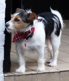 Falmouth ... dog. | Flickr - Photo Sharing!