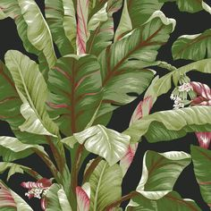 Banana Leaf Wallpaper in Green and Black design by York Wallcoverings ($48) ❤ liked on Polyvore featuring home, home decor, wallpaper, wallpaper samples, black green wallpaper, black home decor, green flower wallpaper, green wallpaper and black wallpaper