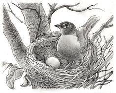 Art Drawings For Kids, Amazing Drawings, Bird Drawings, Pencil Art Drawings, Art Drawings Sketches, Easy Drawings, Animal Drawings, Drawing Birds, Pichwai Paintings