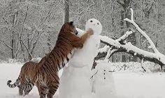 Resultado de imagem para animais da neve