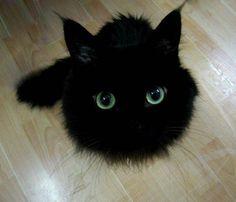 ツンツンしたくなるふわもこ黒にゃんこさん                                                                                                                                                     もっと見る