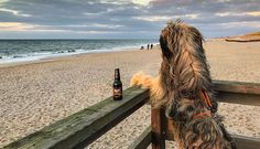 Der Inselguide für Hundehalter. Was gibt es auf Sylt mit Hund zu beachten? Wissenswertes zur Anreise, Hundestränden, hundefreundlichen Hotels und Restaurants, Adressen von Tierärzten und Shopping für den Vierbeiner. Sylturlaub mit Hund Sylt ist einer der hundefreundlichsten Urlaubsorte, die ich kenne. Die meisten Restaurants sind auf den vierbeinigen Gast eingestellt, vor vielen Geschäften und Lokalen stehen gefüllte Wassernäpfe