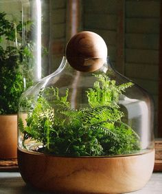 Find Out How To Plant The Best Indoor Gardens - mom.me