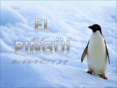 Power point   els pingüins