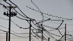 Videot paljastavat yksittäisten lintujen liikkeen parvessa. Kaikki ovat nähneet luonnossa tai televisiossa valtavien lintuparvien upeita...