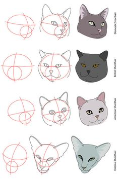 how to draw a cat head side view