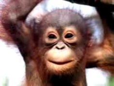 Monkey Singing Happy Birthday Song Funny - YouTube