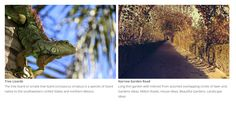 slider Plugin Fully Responsive Light Weight Easy Powerful WordPress Slider Slideshow Plugin
