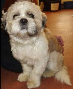 FOUND: Leigh & Wigan area, now at Leigh Cats and Dogs Home (01/02/16) Via Found in the Pound UK.