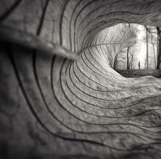 Ponderation — larameeee:     A leaf's point of view… Photography...
