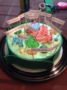 Plant Cell/ Célula Vegetal Homemade plant cell: this is a cake decorated with candies like gummies, jelly, bubblegum and chocolates. Plant Cell Project Models, 3d Plant Cell Model, Edible Cell Project, Cell Model Project, Animal Cell Project, Model Of A Cell, Biology Projects, Science Projects For Kids, Science For Kids