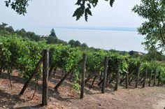 Balaton, Badacsony Vineyard, Wine, Fruit, Outdoor, Outdoors, The Fruit, Outdoor Games