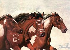 3 Awesome Painted Indian War Ponies.