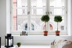 Giant windows needs low window shelves. (Unless you have crazy tall walls. I'd like low window shelves anyway.)