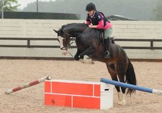 Straighten Your Horse for a Safer Ride over Fences