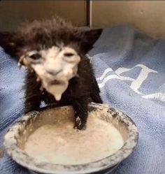 Stupid Funny Memes, Funny Relatable Memes, Haha Funny, Funniest Memes, Funny Fails, Funny Animal Memes, Funny Animals, Cute Animals, Funny Cat Pictures