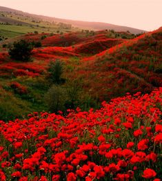 Nature Landscape, Landscape Photos, Landscape Photography, Nature Photography, Beautiful Landscapes, Beautiful Gardens, Beautiful Flowers Wallpapers, Belleza Natural, Red Poppies
