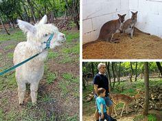 RoBirtok - állati (jó) élmények testközelből - Mom With Five Goats, Husky, Animals, Animales, Animaux, Animal, Animais, Husky Dog, Goat