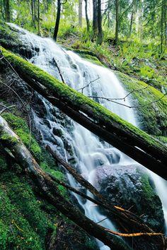 Cougar Mountain, Renton, WA   [Seattle's Best City Parks]