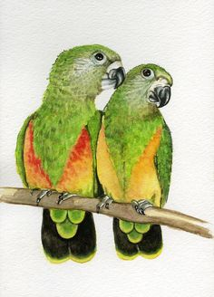 Senegal Parrots 5x7 original watercolor painting art &