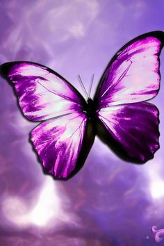 Why the Butterfly for the Avatar? People have asked me, why the butterfly? I chose the butterfly to represent for several reasons. Symbolic in so many ways, the butterfly represents new life. Butterfly Photos, Butterfly Wallpaper, Purple Butterfly, Butterfly Tattoos, Butterfly Kisses, Butterfly Art, Butterfly Painting, Purple Flowers, Purple Love