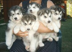Put a bow around all of them, it will be a BOUQUET of DOGS. Way better than flowers.