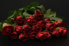 Free photo: Roses, Red, Red Roses, Rose Red - Free Image on ...