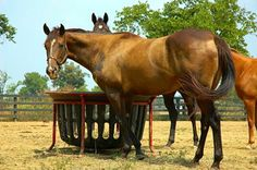 Feeder Facts - Knowing these 10 feeder facts can help you make the ideal choice for you and your equine partner. TheHorse.com