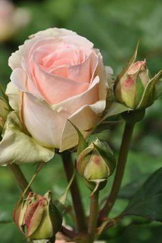 ✿⊱❥ Delicadeza em forma de flor