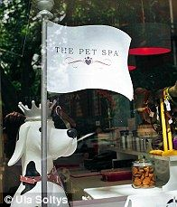 Ticky Hedley-Dent checks out the world of doggy facials, Paw-dicures and Fur-jazzles at pet spas in high-end Chelsea and blingtastic Essex. Grooming Shop, Dog Grooming Tips, Store Displays, Window Displays, Dog Spa, Graphic Design Templates, Hotel Spa, Dog Owners, Pet Care