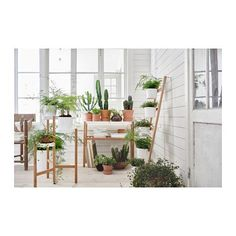 IKEA - SATSUMAS, Plant stand, bamboo, white, A plant stand makes it possible to decorate with plants everywhere in the home. You can decorate with plants in a visually interesting way with shelves at different levels. For indoor use. Bamboo Plants, Cool Plants, Green Plants, Hanging Plants, Indoor Plants, Indoor Gardening, Indoor Herbs, Indoor Greenhouse