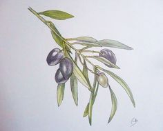olivo dibujo - Buscar con Google Weddings, Google, Plants, Block Prints, Home, Olive Tree, Dibujo, Flowers, Wedding