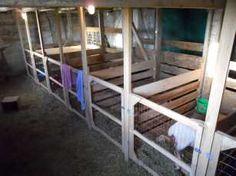 Full Maternity Stalls