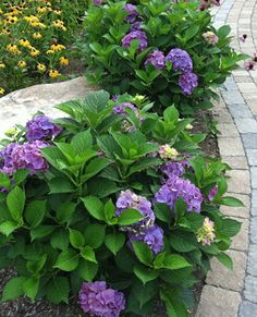 Landscaping Trees | ... landscape plan completes the hardscaping project landscape plantings