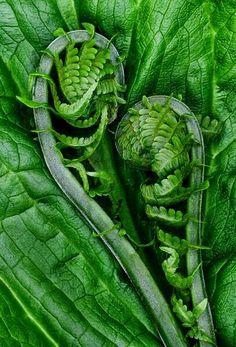 Verde http://calgary.isgreen.ca/