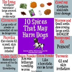 Did you know there are spices that may harm dogs? Home cooking for dogs is a very popular option for pet parents. Foods Dogs Can Eat, Dangerous Foods For Dogs, Foods Bad For Dogs, Dog Nutrition, Dog Diet, Dog Safety, Dog Eating, Homemade Dog Food, Pet Health