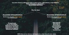 Relacionesintraespecíficas; qué es, tipos y ejemplos | OVACEN Weather, Movie Posters, Portuguese Man O' War, Trophic Level, Relationships, Film Poster, Weather Crafts, Billboard, Film Posters