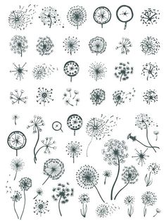 A pack of 24 decorative dandelion flower set. Useful for decorative icons, creating logo, page decoration and pattern making. Dandelion Drawing, Dandelion Designs, Dandelion Flower, Dandelion Tattoo Design, Hanya Tattoo, Page Decoration, Tatuajes Tattoos, Chalkboard Lettering, Flower Doodles