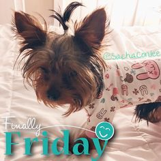 Oh my dawg! It's finally #furryfriday !! I wait all week for this day to arrive and it seems like it's gone in 24 hours!? I'm so ready for the weekend guys how about you? What fun things do you have planned for this weekend? I love you! Enjoy your day!   @ej_the_yorkie - My dear sweet friend one of my firsts on IG and he really needs our prayers and positive thoughts all headed his way that he will be helped and cured with simple antibiotics!! #prayforej  . . Please check out my pawtners…