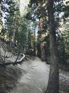 """By Sarah Attar, """"Trail Rhythm"""""""