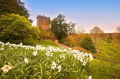 Ireland in spring? Let us help you explore!