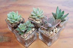 """72 Square Votive with 72 Potted 2"""" Succulents and decorative gravel topper KIT AMAZING favors for weddings, showers, gifts"""
