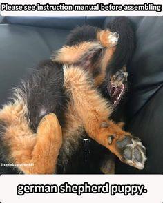 Please see instruction manual before assembling german shepherd puppy.