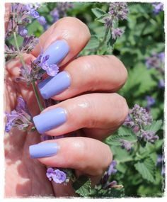 Wisteria fra Picture Polish Picture Polish, Wisteria, My Nails, Pictures, Painting, Beauty, Pastel, Photos, Painting Art