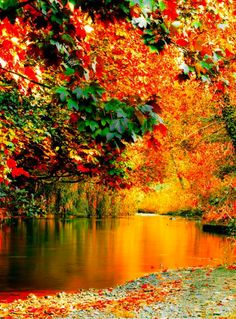 "djferreira224: "" Autumn along the River Dodder, Rathfarnham, Dublin. """
