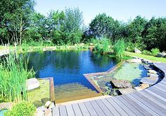 Natural Swimming Pool (plants keep it clean no chemicals)