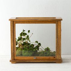 "A sliding front panel makes it easy to arrange plants or curios inside this museum-inspired case terrarium.- Wood, metal, glass, metal humidity tray lining- Indoor use only- Imported15""H, 17.5""W, 8.75""DOnline Exclusive"