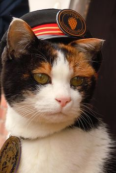 Tama, an aged cat, works as a station master in Wakayama, western Japan, helping the local economy by attracting tourists from around Asia. Japan Cat, Wakayama, Calico Cats, Animal 2, Pretty Cats, Weird And Wonderful, Train Station, I Love Cats, Adorable Animals