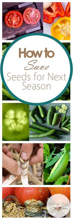 How to Save Seeds for Next Season| Save Seeds, How to Save Seeds, Gardening, Gardening Tips and Tricks, Indoor Gardening, Seasonal Gardening, Winter Gardening, Popular Pin #Gardening #WinterGardening