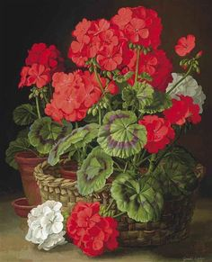 Gerald A. Cooper. Geraniums. 1955.......For Aunt Hilda, who grew the biggest, most beautiful red geraniums.